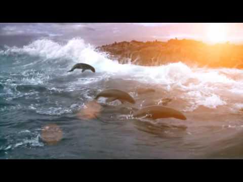Embedded thumbnail for Oxygene The Ocean1